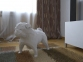 Бумажная модель 3Decor Papercraft Собака Французский бульдог (56) 0
